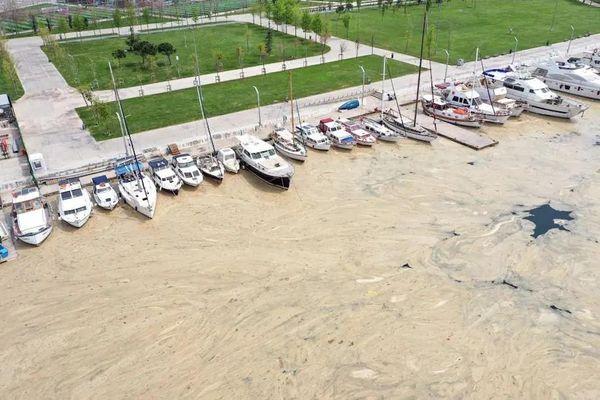 Chất lạ 'bóp nghẹt' bờ biển Thổ Nhĩ Kỳ