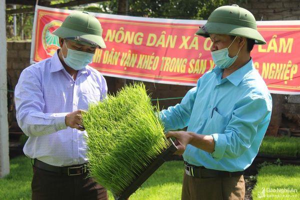 Nông dân Quỳnh Lưu gieo mạ khay và cấy máy tiết kiệm chi phí