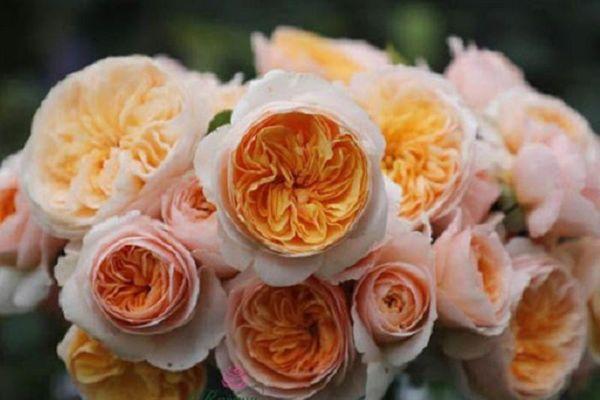 Những loài hoa đắt giá nhất hành tinh, có tiền cũng khó sở hữu