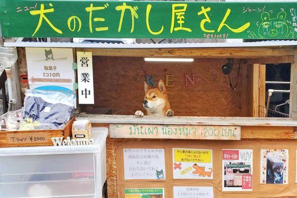 Chú chó bán khoai nổi tiếng Nhật Bản qua đời