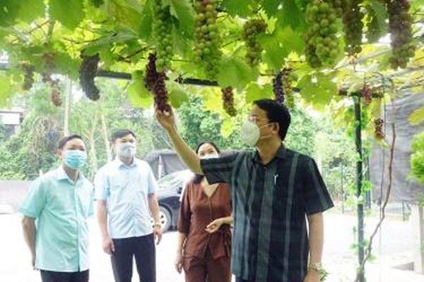 Thái Nguyên nhân rộng các mô hình sản xuất nông nghiệp an toàn