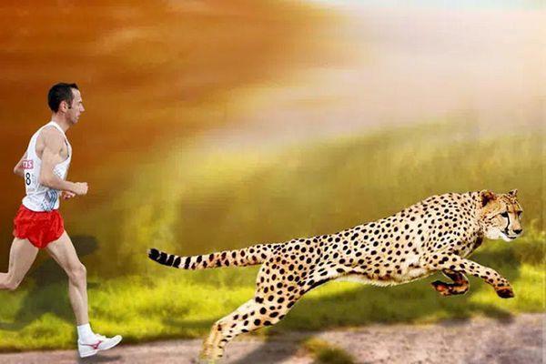 Nếu nói về khả năng chạy, con người là nhà vô địch vượt mặt báo săn