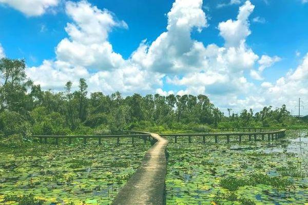 Về Làng nổi Tân Lập - Check-in 'đường xuyên rừng tràm đẹp nhất Việt Nam'