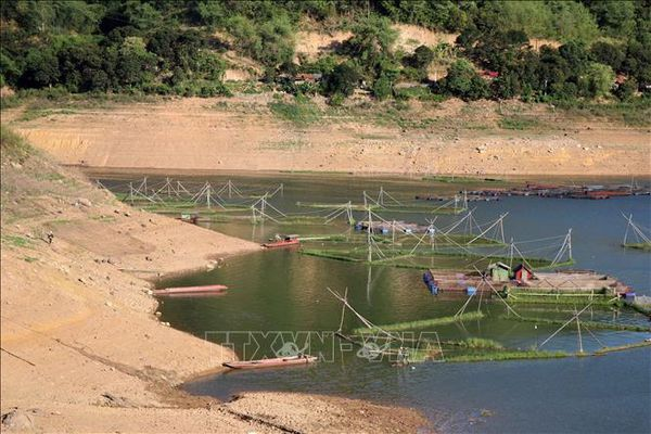 Hàng trăm hộ nuôi cá lồng trên vùng lòng hồ thủy điện Hòa Bình gặp khó