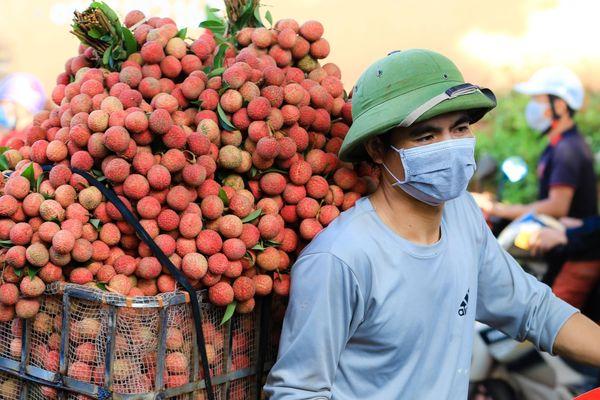 Giữa bão Covid-19, Bắc Giang tiêu thụ hết toàn bộ lượng vải thiều chín sớm