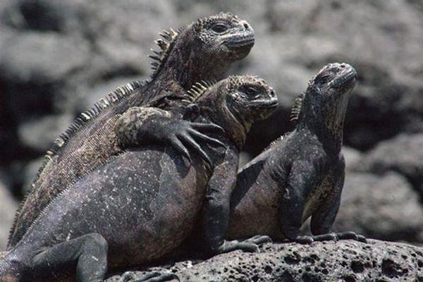 Điểm danh 10 loài bò sát kỳ lạ nhất thế giới