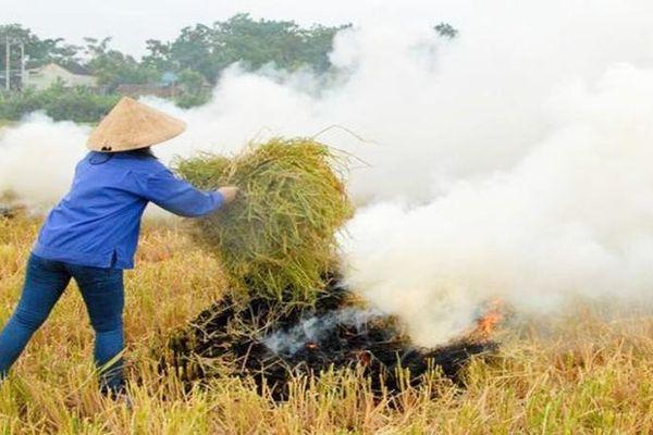Xử nghiêm việc đốt rơm rạ, phụ phẩm nông nghiệp sai quy định, gây ô nhiễm