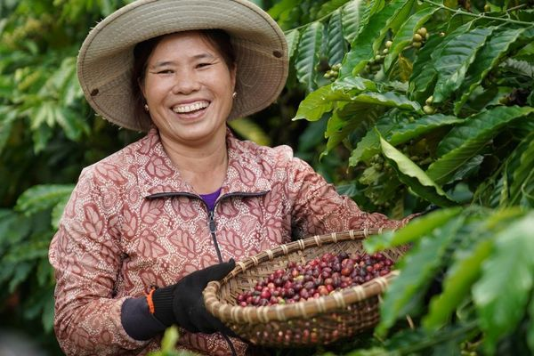 Hiệu quả cao từ các mô hình liên kết sản xuất và tiêu thụ cà phê