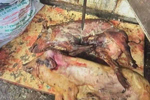 Phát hiện cả tấn thịt lợn bốc mùi hôi thối trong tủ cấp đông
