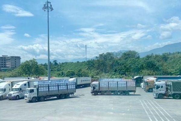 Lào Cai xuất khẩu gần 11.000 tấn vải thiều Bắc Giang