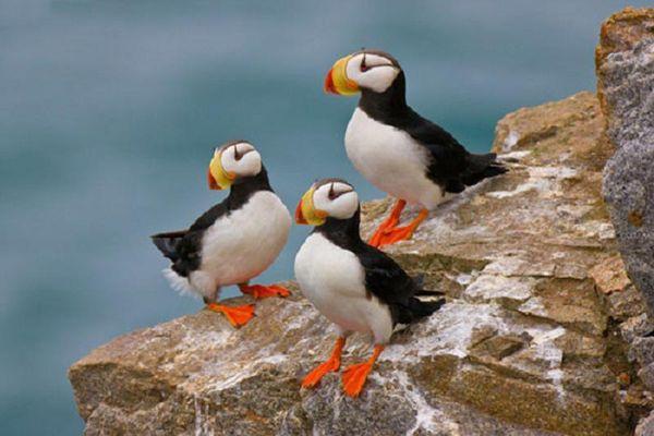 Những loài chim đẹp nhất thế giới, quý hiếm hơn cả vàng