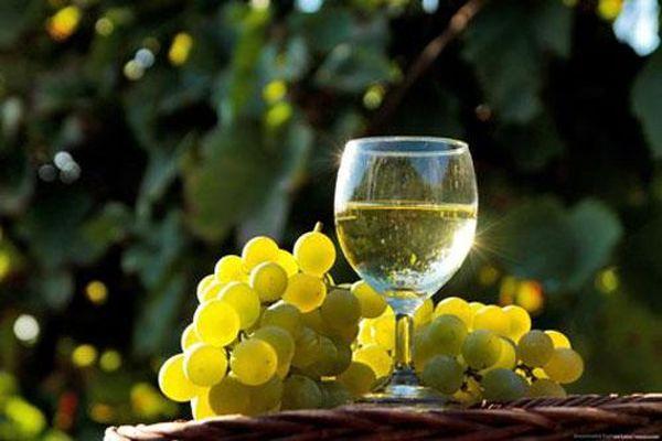 Rượu vang trắng và mối nguy hiểm khôn lường đối với phụ nữ