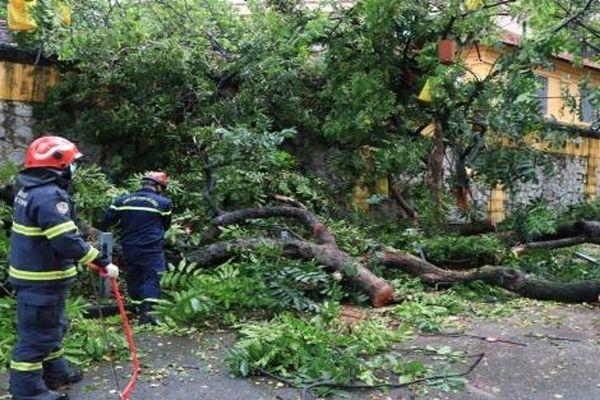 Hà Nội: Khắc phục sự cố cây cổ thụ bật gốc, chắn ngang phố Hỏa Lò