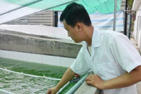 Khởi nghiệp với mô hình nuôi tảo Spirulina