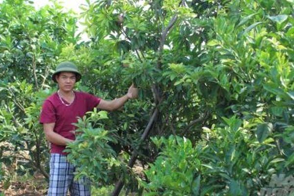 Xã mỗi năm sản xuất 2 triệu cây giống ăn quả