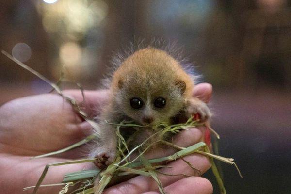 Đồ 'khỉ gió': Hóa ra con khỉ gió là con vật kỳ lạ này