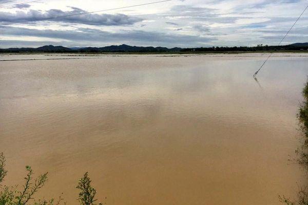 Mưa lớn gây ngập gần 3.500 ha lúa hè thu ở Nghệ An