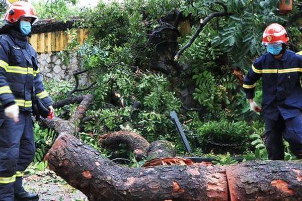 Hà Nội: Nỗi lo cây gãy đổ thường trực trên đầu người dân khi mùa mưa bão đến