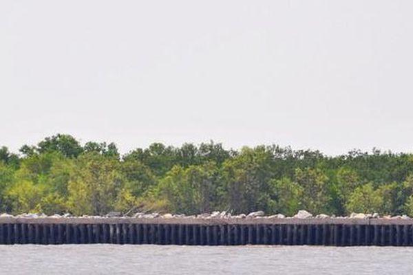 Nghiên cứu kè biển để phòng, chống sạt lở bờ biển Cà Mau