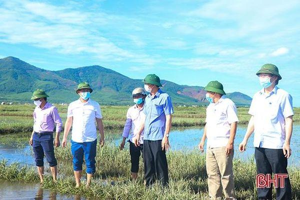 Huyện Kỳ Anh cần chuẩn bị sẵn sàng các loại giống ngắn ngày, gieo cấy lại diện tích lúa bị hư hỏng