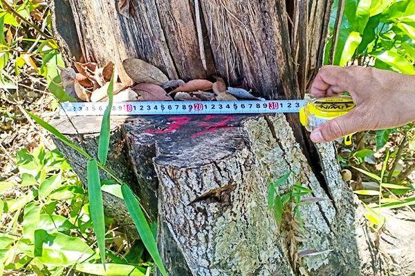 Sơn Lâm: Một vụ phá rừng trái phép