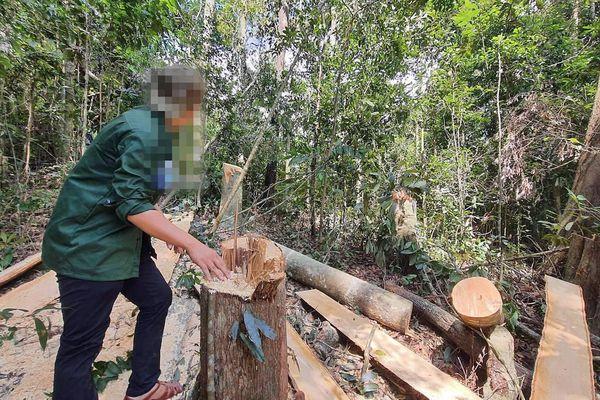 Phó Thủ tướng yêu cầu xử lý nghiêm vụ phá rừng tại Gia Lai