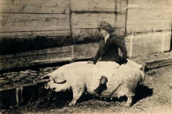 Độc lạ thú vui cưỡi lợn đi chơi trong thế kỷ 20
