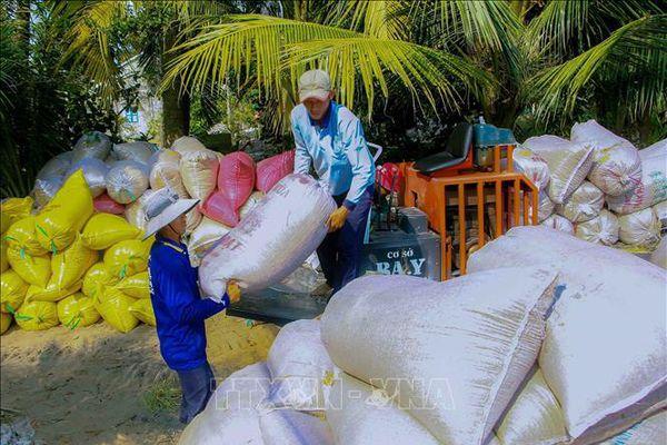 Cần Thơ: Lo lắng vụ lúa Hè Thu 'thiệt hại kép'