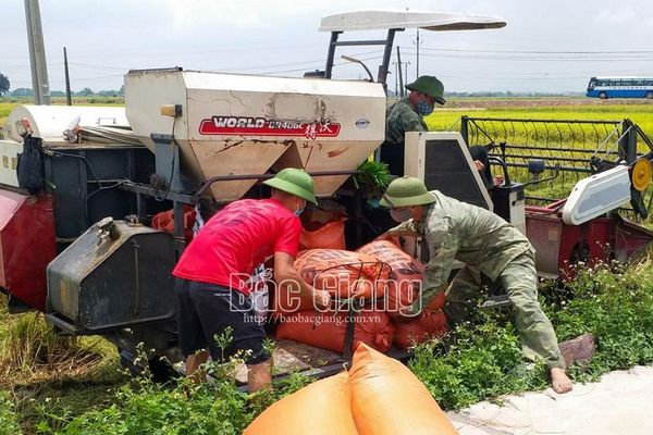 Bắc Giang: Gieo cấy 22 nghìn ha lúa mùa chất lượng