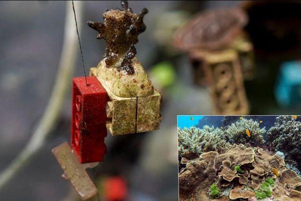 Các nhà khoa học Singapore dùng Lego để phục hồi rạn san hô