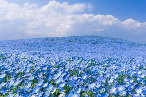Thiên đường hoa nở quanh năm ở Nhật Bản