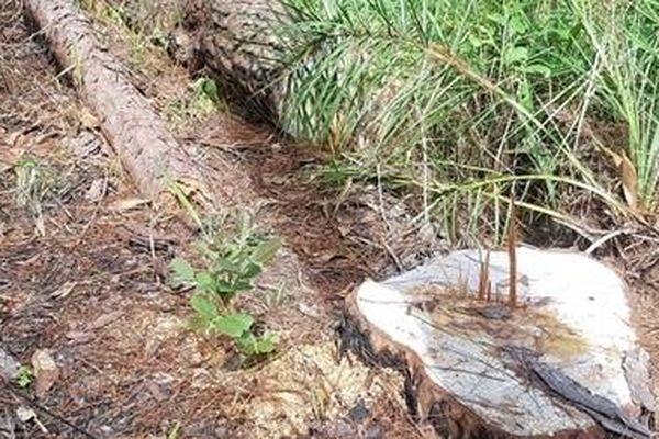 Công an vào cuộc vụ phá rừng Báo CAND phản ánh