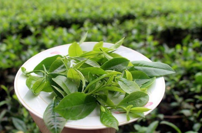 Chế cối đá nghiền trà xanh: 9X Thái Nguyên kiếm tiền tỷ - Báo VietnamNet