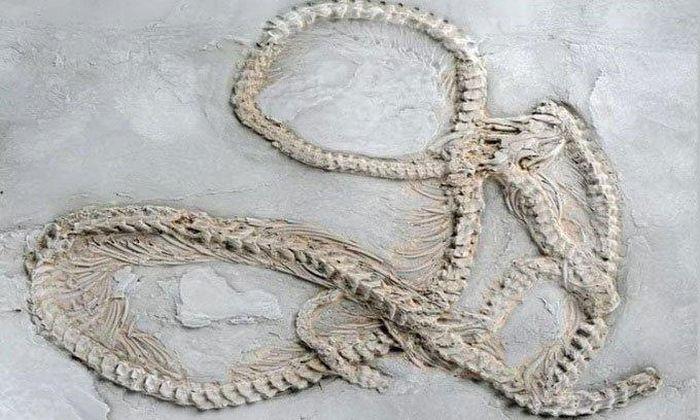Sự xuất hiện bí ẩn của trăn cổ khổng lồ 48 triệu tuổi - ảnh 2.