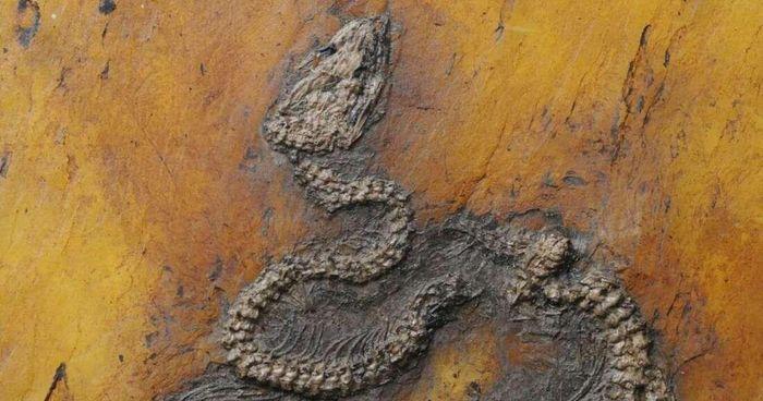 Sự xuất hiện bí ẩn của trăn cổ khổng lồ 48 triệu tuổi - ảnh 3.