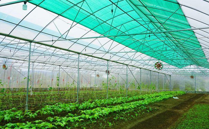 Trồng rau trong nhà lưới tại xã Lục Hồn, huyện Bình Liêu.