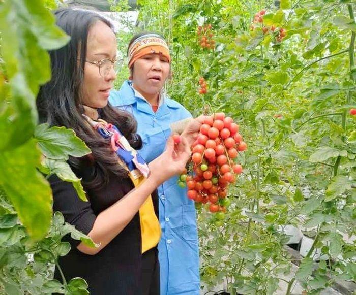 Mô hình trồng rau thủy canh cho hiệu quả, chất lượng cao của Công ty CP Đầu tư xây dựng và thương mại 188 (TX Đông Triều).