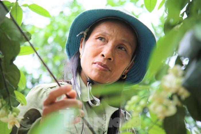 Xem nông dân Hà Tĩnh thụ phấn cho 'đệ nhất bưởi'