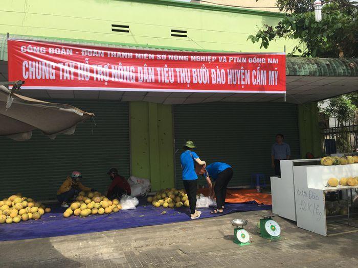 Hàng trăm tấn bưởi chờ 'giải cứu' ở Đồng Nai