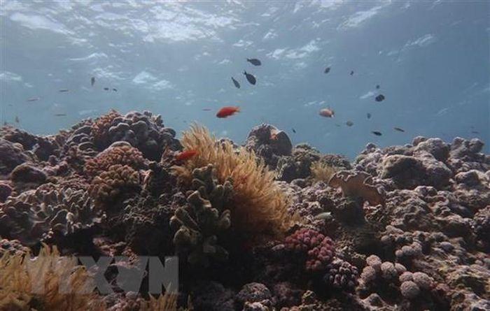 Australia phạt tàu nước ngoài đổ rác thải tại rạn san hô nổi tiếng