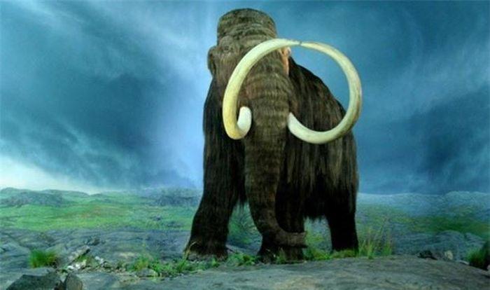 Nghiên cứu xác voi ma mút lông dày hé lộ bí mật sự di cư của người