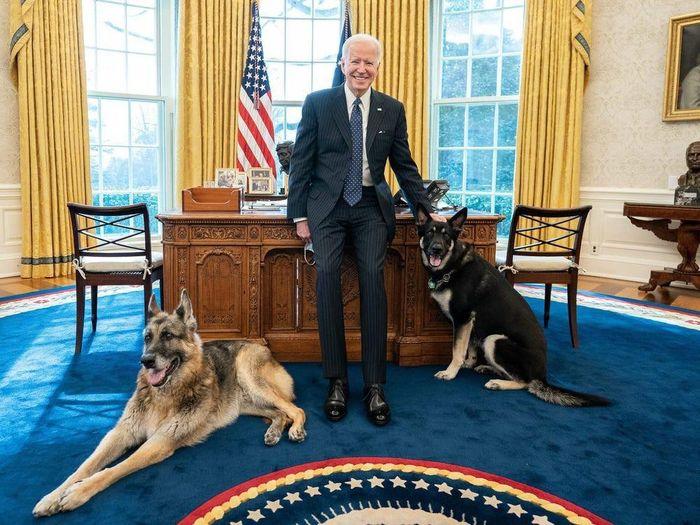 Chó cưng của ông Biden phải rời Nhà Trắng vì 'cắn nhân viên an ninh'