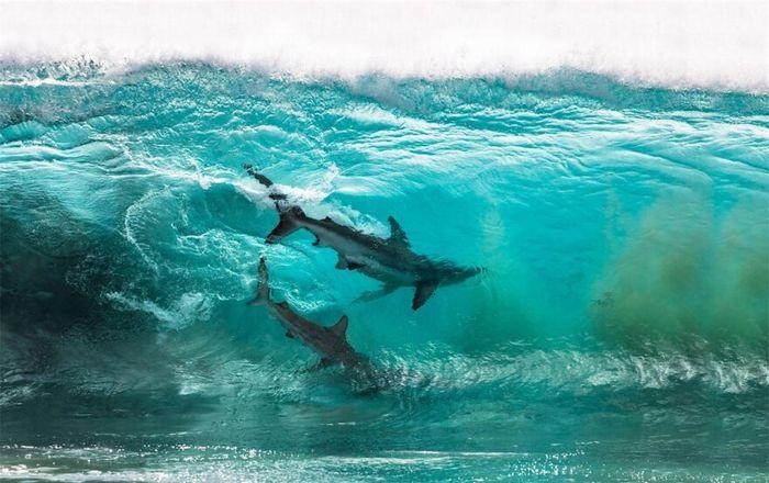 Ấn tượng những khoảnh khắc độc đáo và ngoạn mục của thế giới đại dương