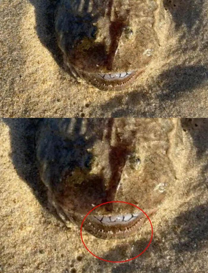Phát hiện loài thủy quái nằm chình ình ngay trên bờ biển Australia