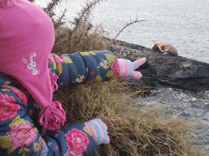 Ngủ quên trên tảng băng trôi, hải mã trôi dạt từ Bắc Cực tới Ireland
