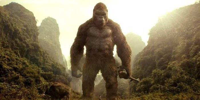 Trước khi tham chiến trận đấu 'Godzilla vs Kong', cần biết ngay 4 điều quan trọng này