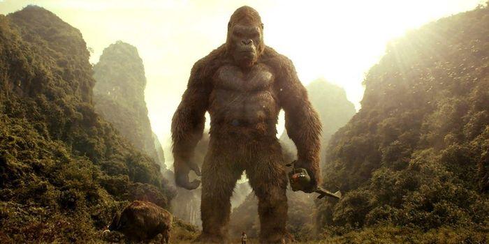 Hé lộ sự thật về cuộc đại chiến giữa Godzilla và Kong