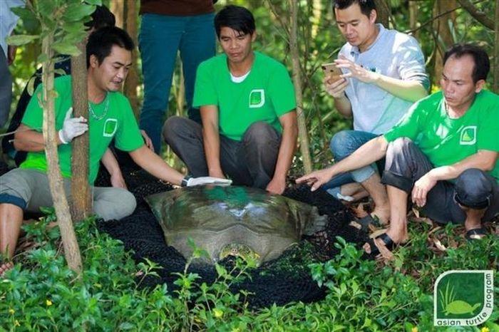 Kế hoạch hồi sinh rùa Hoàn Kiếm được tiến hành ra sao?