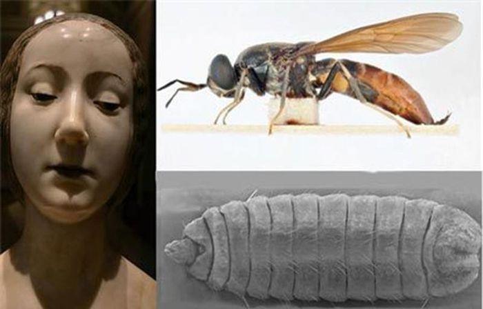 Bí ẩn về ấu trùng ruồi trong di cốt công chúa Italia