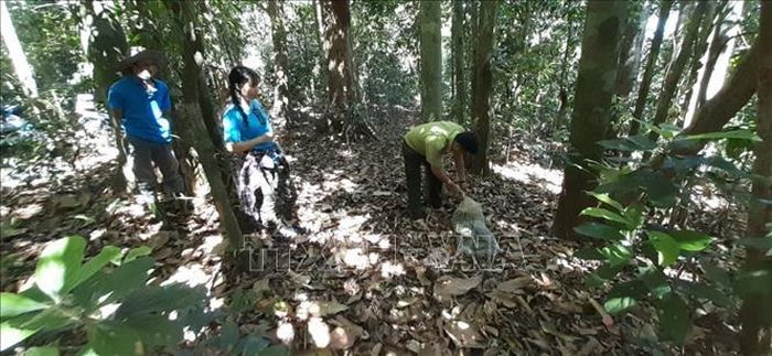 Thả khỉ đuôi lợn và trăn gấm về môi trường tự nhiên